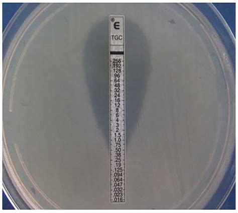 Separation and confirmation of nine Enterobacteriaceae